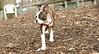 Gussy ( puppy girl)_00004