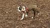 Gussy ( puppy girl)_00002