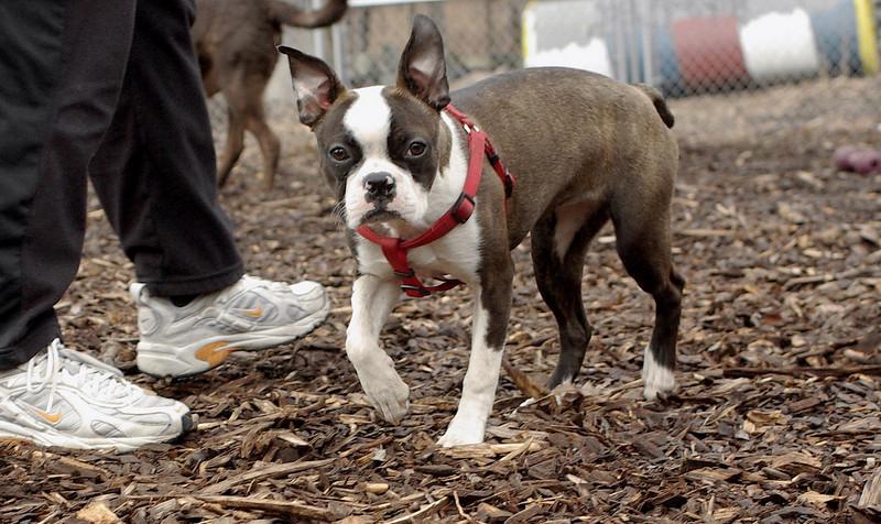 Gussy ( puppy girl)_00003