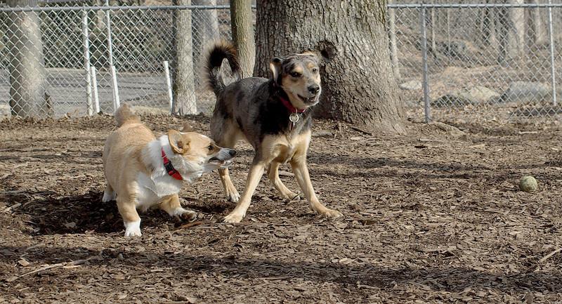 dogpark 20th 033
