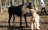 Hank (pup), Harley (GD)_00003