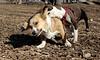 Gussy (pup), Joey (C)_00001