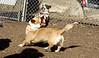 Gussy (pup), Joey (C)_00003