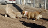 Hank (pup), Joey (girl)_00001