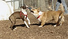 Gussy (pup), Joey (C)_00002