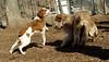 Hank (pup), Maddie (pup)_00001