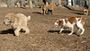 Hank (pup), Maddie (pup)_00003