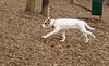 BELLE (new puppy)_00002