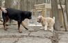 Hank (pup), Jake_00008