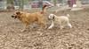 Hank (pup), Riley (girl)_00001