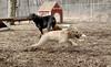 Hank (pup), Jake_00002