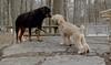 Hank (pup), Jake_00005