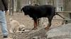 Hank (pup), Jake_00009