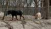 Hank (pup), Jake_00003