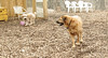 Hank (pup), Riley (girl)_00003