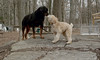 Hank (pup), Jake_00006