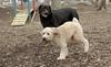 Hank (pup), Jake_00010