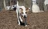 BELLE (puppy)_00002