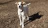 BELLE (puppy)_00007