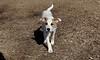 BELLE (puppy)_00006