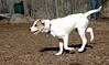 BELLE (puppy)_00003