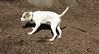 BELLE (puppy)_00004