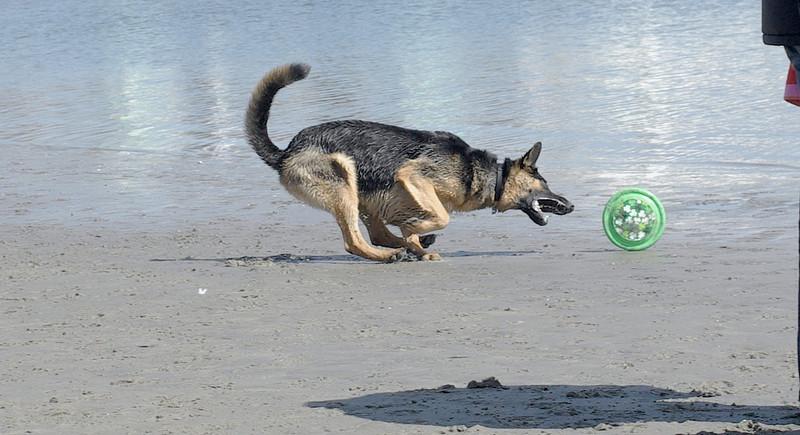 faith, beach rye