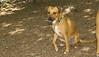 Holly (island dog)_00001