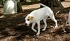 Belle (puppy girl)_00001