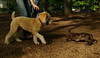 Baby (rescue), Hank (pup)_00001