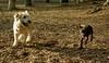 Baby (rescue), Hank (pup)_00002