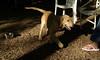 Chloe ( puppy new)_00005
