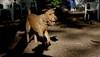 Duffy (irish terrier)_00001