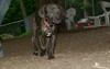Baby (rescue puppy)_00002