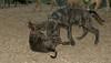 Baby, Bruiser (rescue puppies)_00002