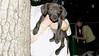 Baby (rescue puppy)_00003