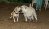 Dixie (puppy), Max (girl)_00001