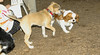 Dixie (puppy), Polly_00001