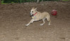 Dixie (puppy)_00001