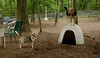 wilber (beagle), Maddie_00002