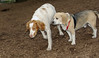 Louis (brittany), wilber_00001