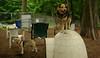 wilber (beagle), Maddie_00001