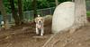 Wilber (beagle)_00002