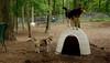 wilber (beagle), Maddie_00003