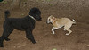 Dixie (puppy), Jet_00001