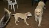 Dixie (puppy), Heidi (GR)_00001