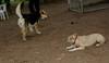 Dixie (puppy), Maddie_00001