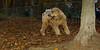 Deacon (wheaton pup boy)_001