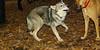 Cheyenne (naid pup girl), Buffy_003