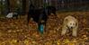 kato, Beau (rottweiler)_001